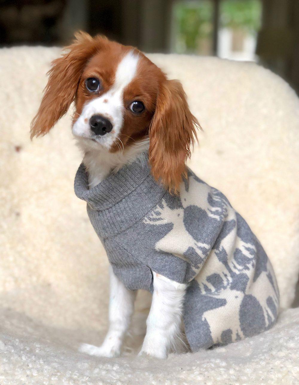 Small dog in pets designer cashmere, the malin darlin cashmere dog sweater.
