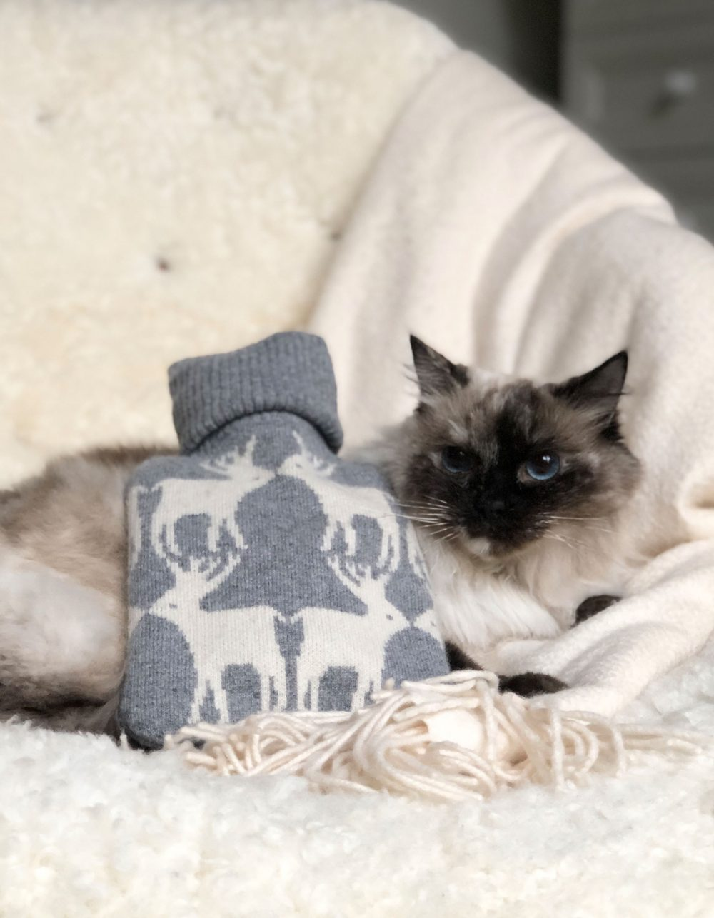 Cat sitting with a cashmere hot water bottle, part of the malin darlin range of designer cashmere gifts.